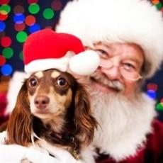 Dog-with-Santa
