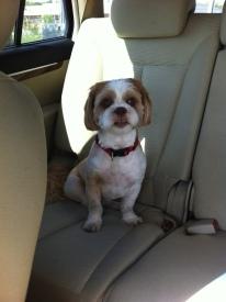 Crimson posing in the car!