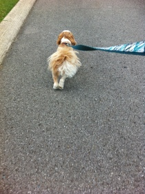 More Walking