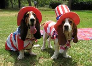 4th-of-july-dog-costume